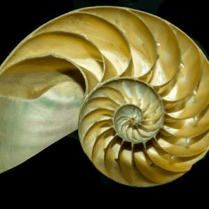 Spirale aurea in una conchiglia