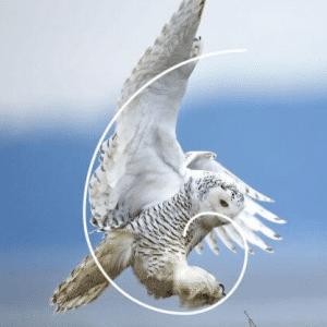 Spirale aurea in un uccello