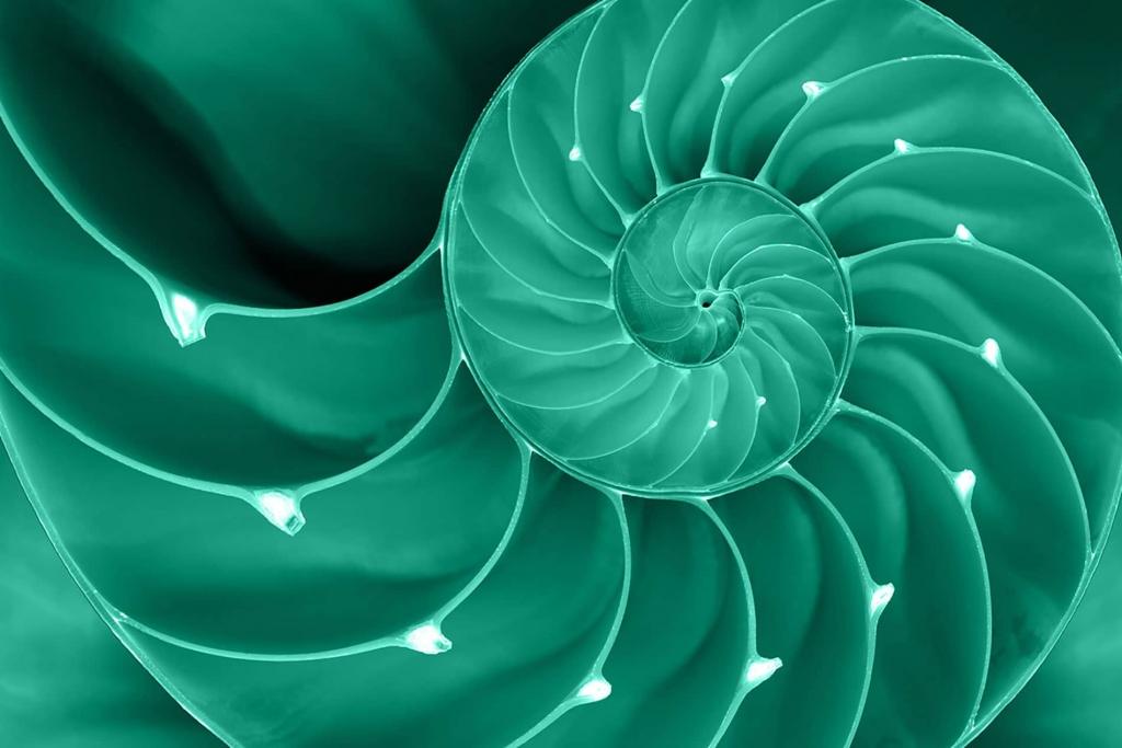 Nautilus - Sezione aurea